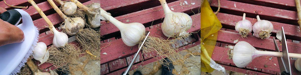Storing Garlic 2