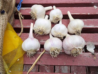 Storing Garlic Music