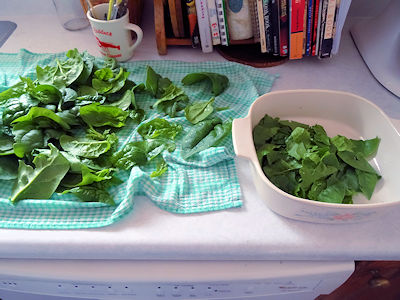 Seafood Salad With Blueberry Vinaigrette 1
